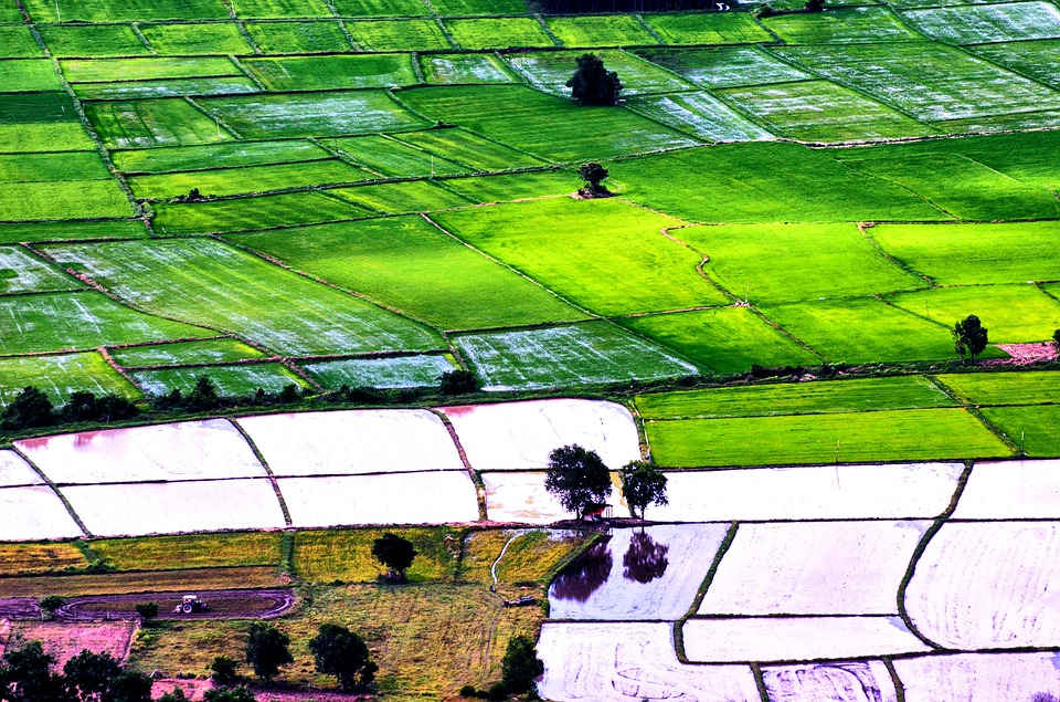 Vietnam, Travel, Rice, Rice Field, Farmer, Landscape