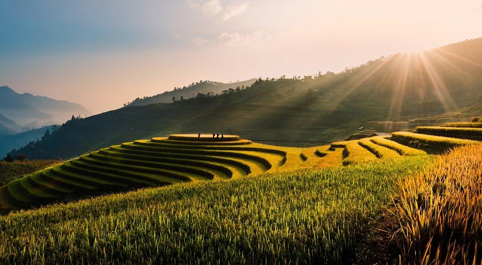 Vietnam, Tu Le, Terraces, Field, Rice Field, Rice
