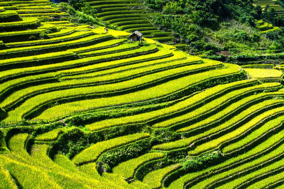 Rice Terraces, Rice Fields, Terraced Fields