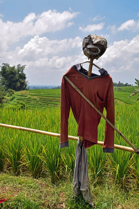 Bali, Indonesia, Travel, Rice Fields, Scarecrow