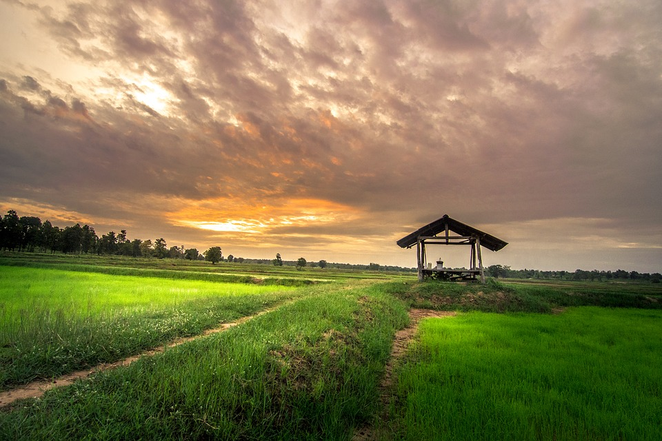Home Outside, Thailand, Cornfield, Rice, Golf Club