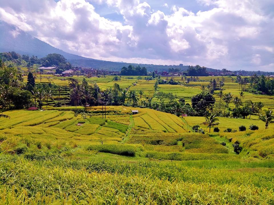 Jatiluwih, Bali, Indonesia, Landscape, Rice, Terraces