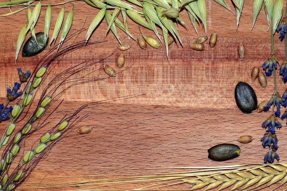 Cereals, Rice, Barley, Wheat, Oats, Pumpkin Seeds, Wood