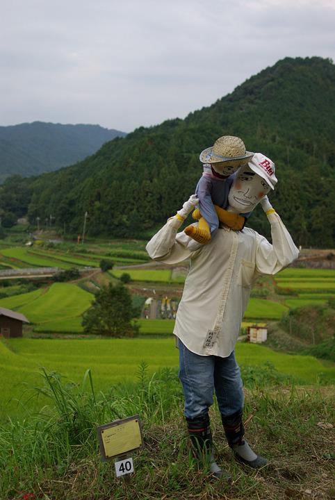 Scarecrow, Kakashi, Nara, Asuka Village, Rice Terraces