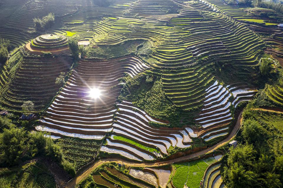 Terraces, Rice Field, Rice, Land, Field, Travel