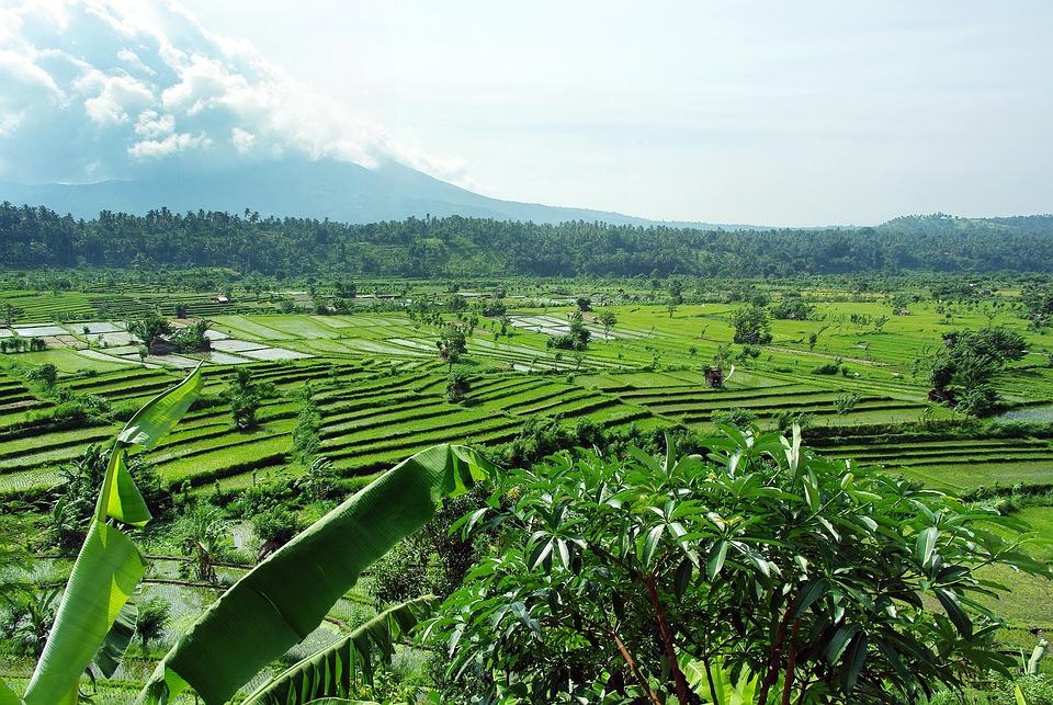 Indonesia, Bali, Rice, Volcano, Mount Agung