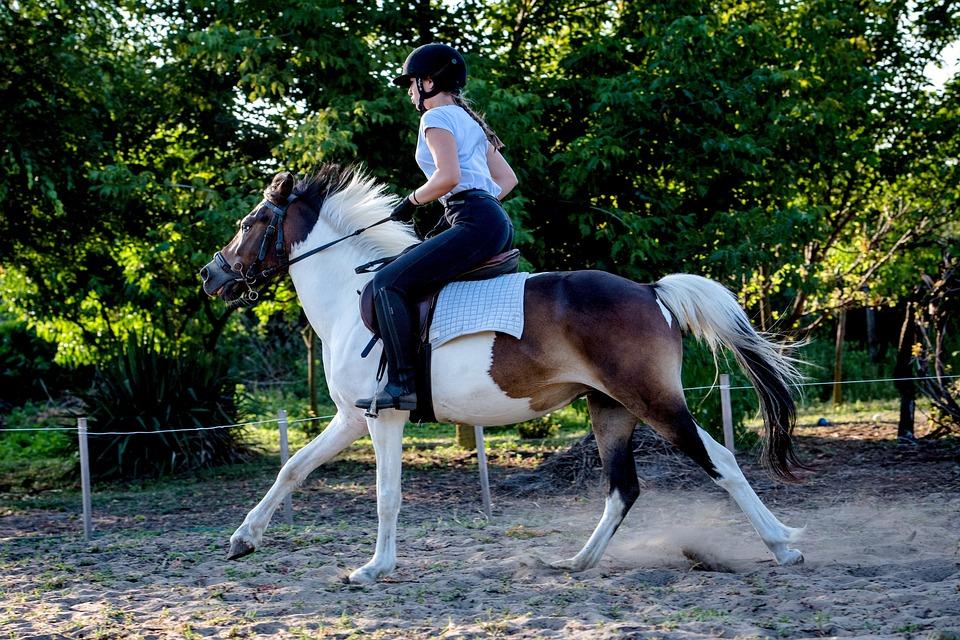 Free photo Ride Animal Nature Rider Horse Freedom Animals - Max Pixel