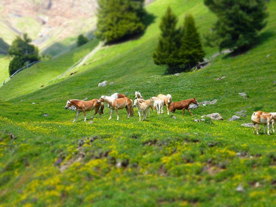 Horses, Horse, Nature, Animals, Horse Head, Ride
