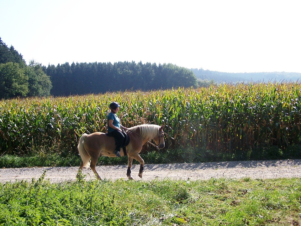 Ride, Summer, Girl, Horse
