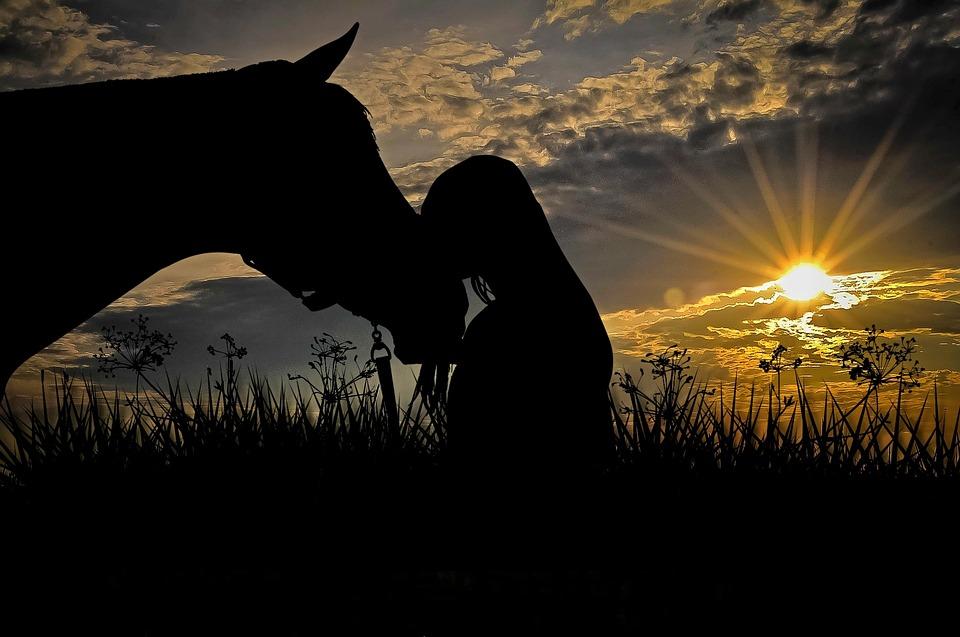 Horse, Animal, Girl, Woman, Ride, Horse Head, Nature
