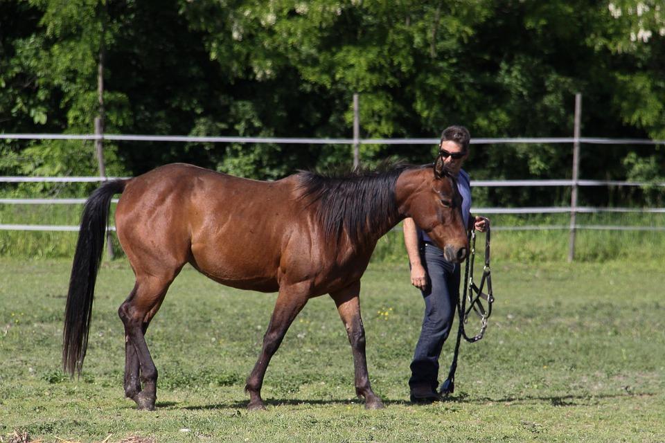 Horse, Dressage, Animals, Western Riding, Ride