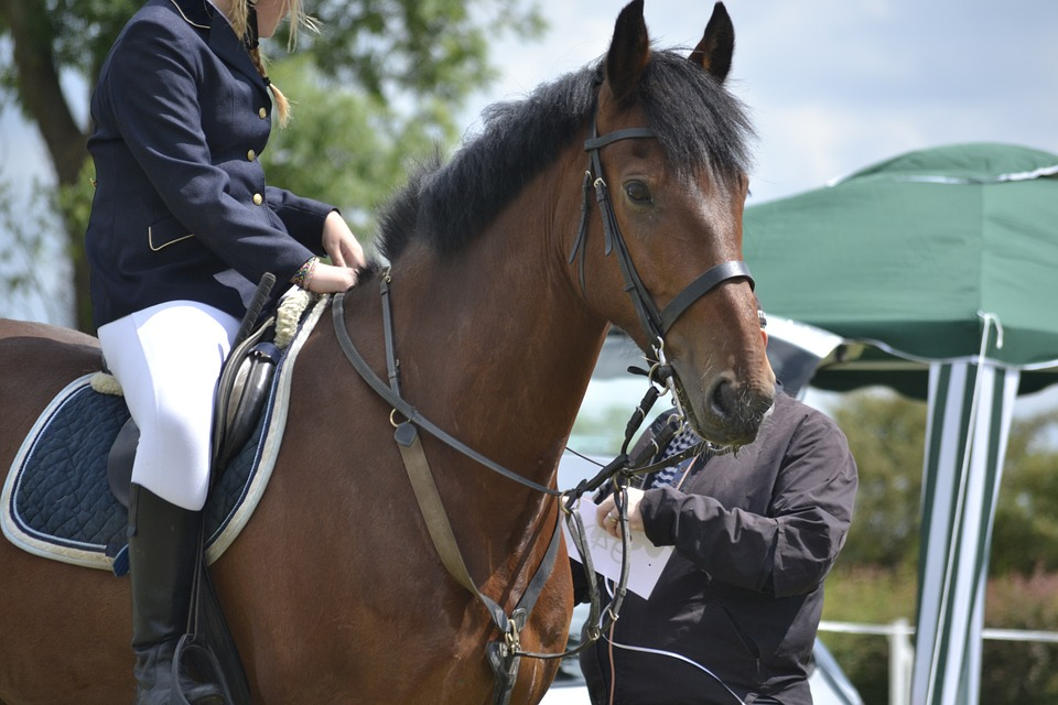 Horse, Rider, Horse Riding, Equestrian, Competition