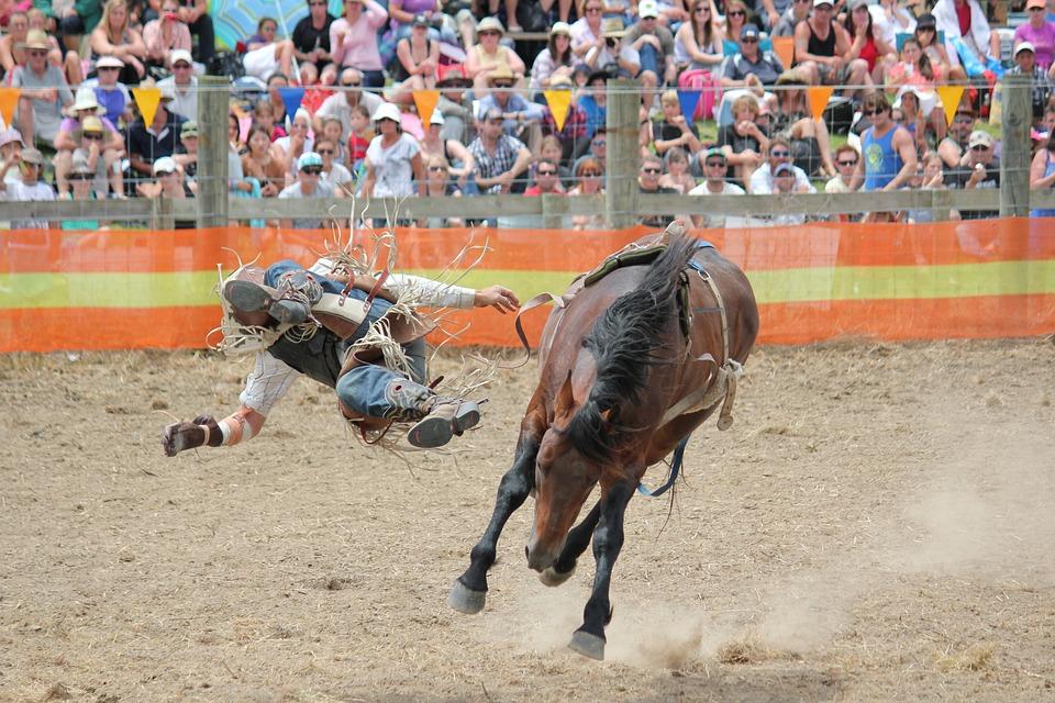 Rodeo, Cowboy, New Zealand, Horse, Rider