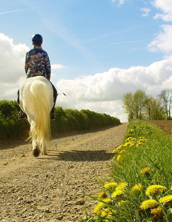 Horseback Riding, Horse, Pony, Rider, Outside Of It