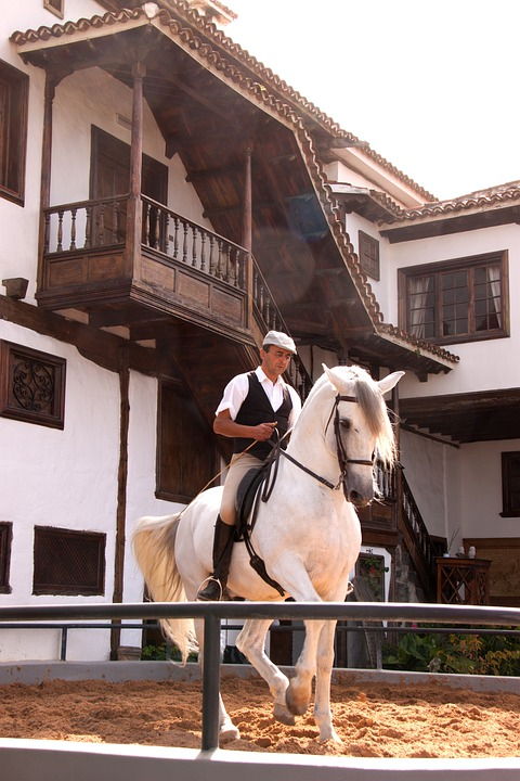 Rider, Horse, Dressage, Horseback Riding, Expensive