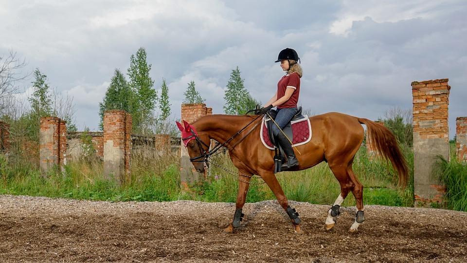 Horse, Rider, Ride, Landscape, Brown, Stallion, Mane