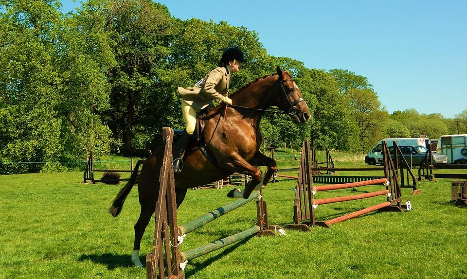 Horse, Rider, Show, Jumping, Equestrian, Sport