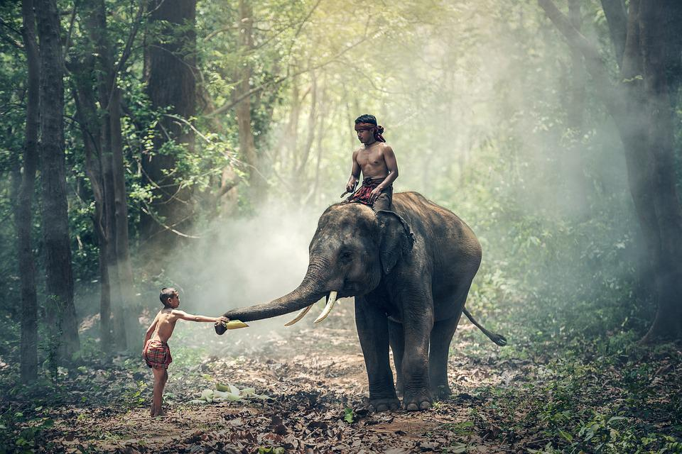 Elephant, Riding, Children, Asia, Cambodia, Cultural