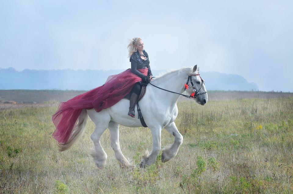 Equine, Horse, Gray, Shire, Nature, Equestrian, Riding