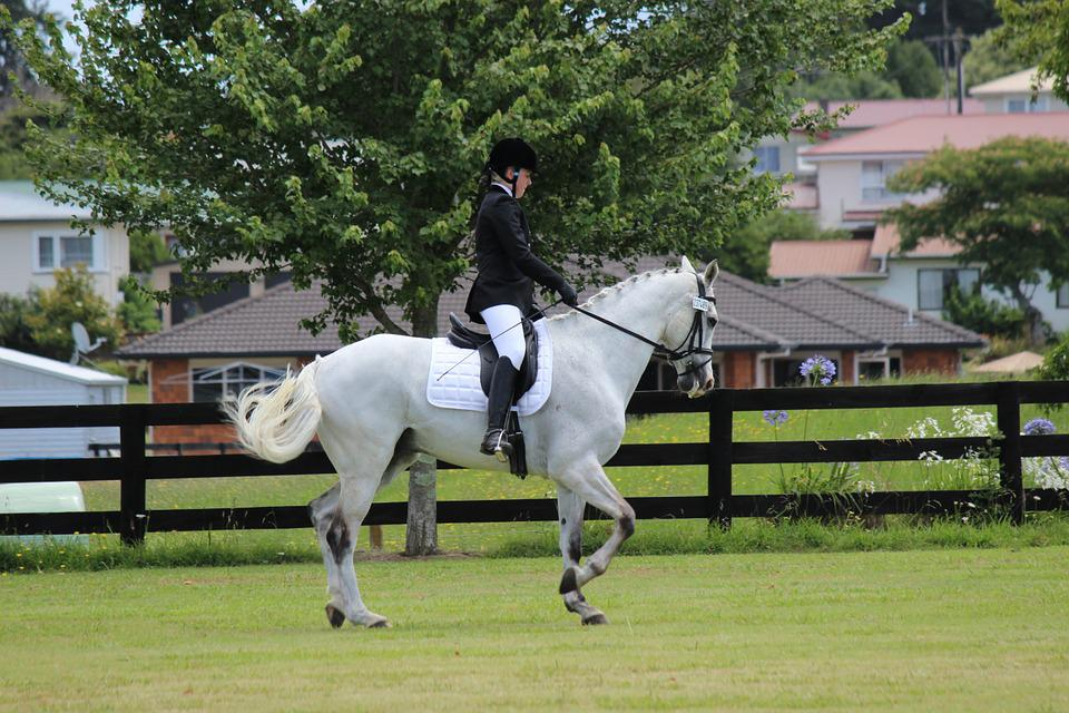 Horse, Riding, Dressage, Animal, Farm, Equine