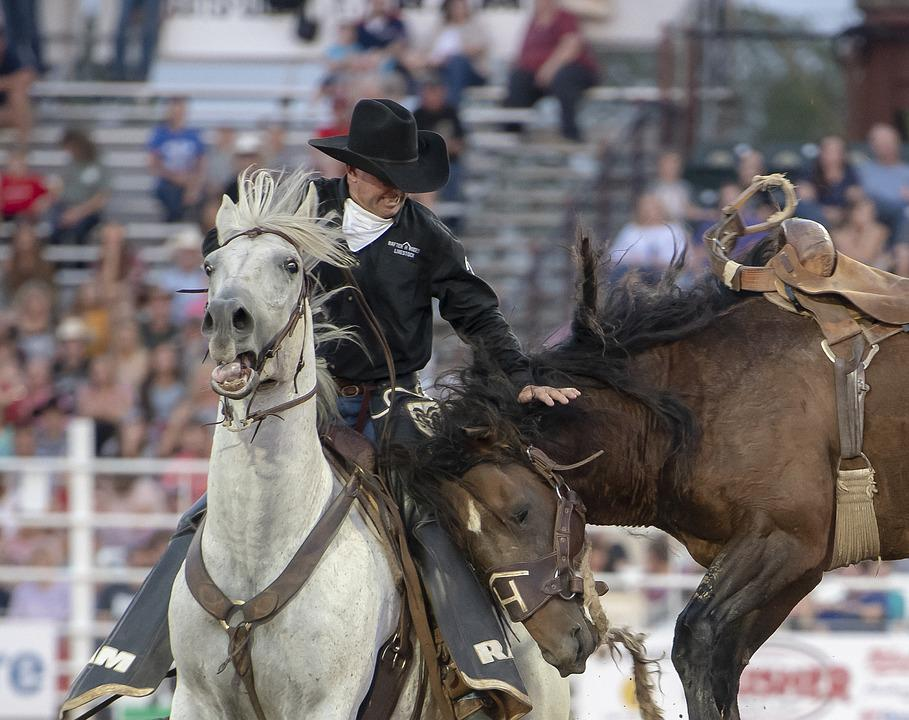 Rodeo, Horse, Cowboy, Animal, Western, Riding