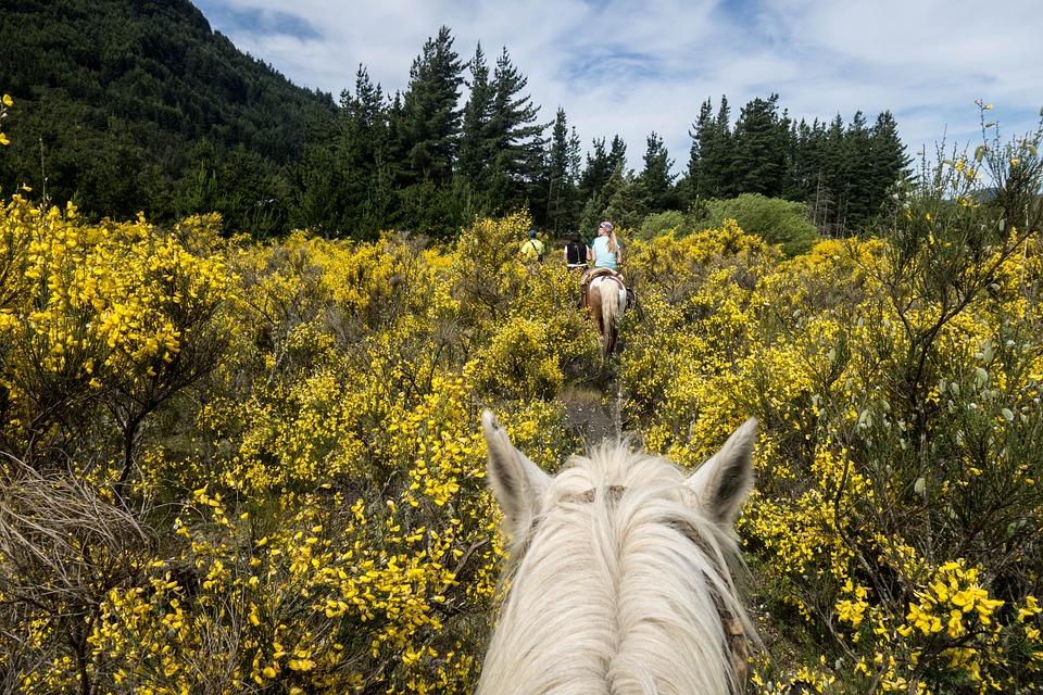 Horse, White Horse, Riding, White, Animal, Nature