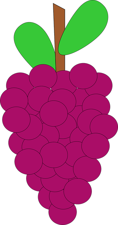 Grapes, Bunch, Ripe, Harvest, Cluster, Purple, Vineyard