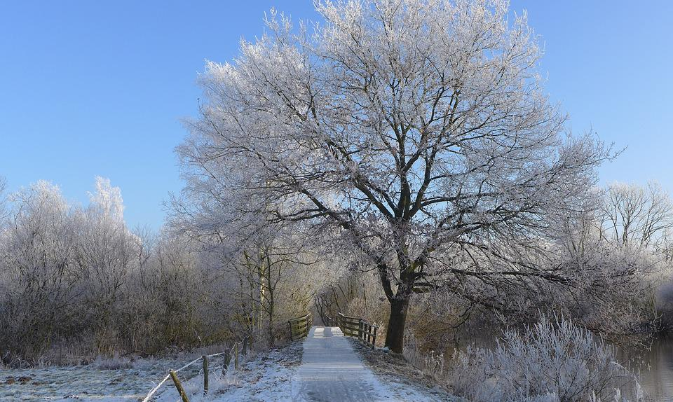 Silent, Away, Ripe, Tree, Winter, Frost, Blue