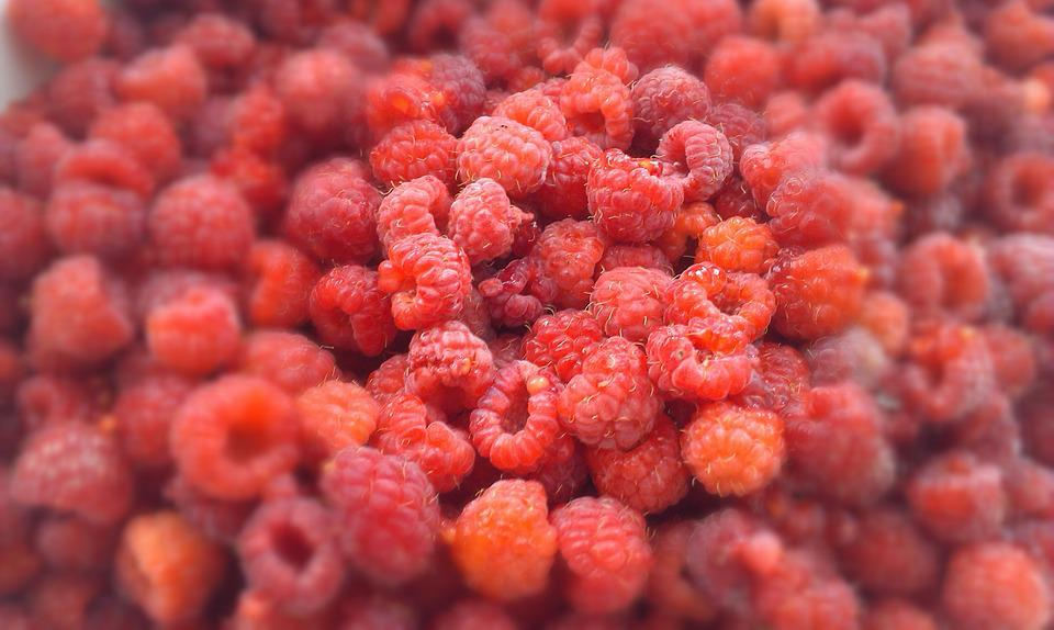 Raspberry, Berry, Berries Of A Raspberry, Harvest, Ripe