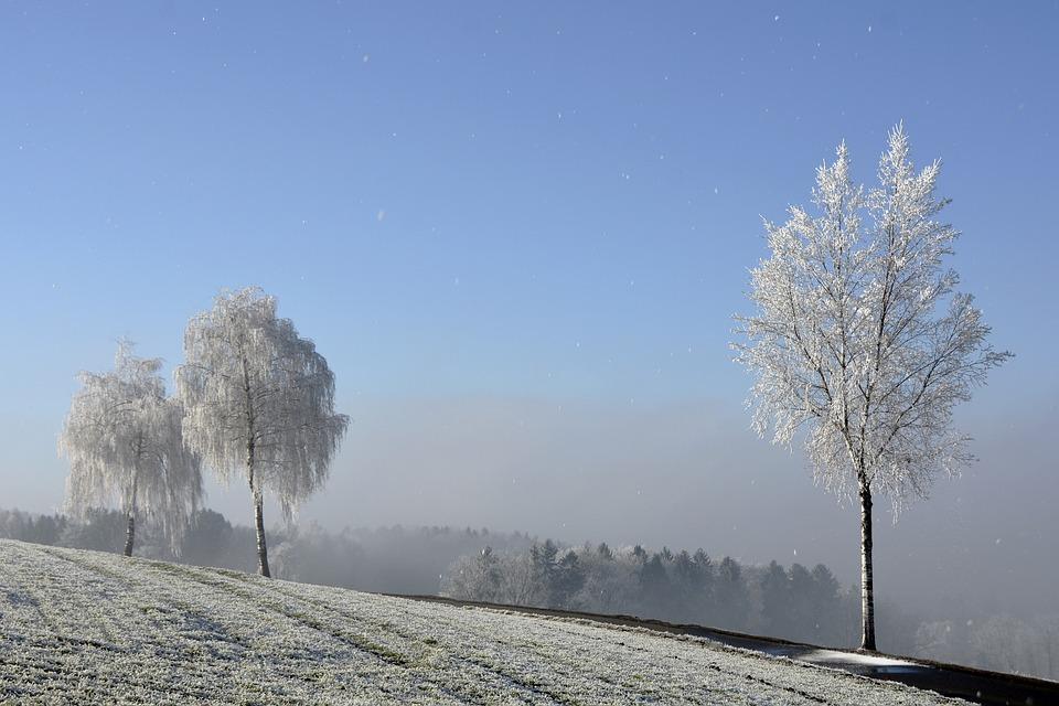 Wintry, Winter, Trees, Morgentau, Ripe, Nature, Mood