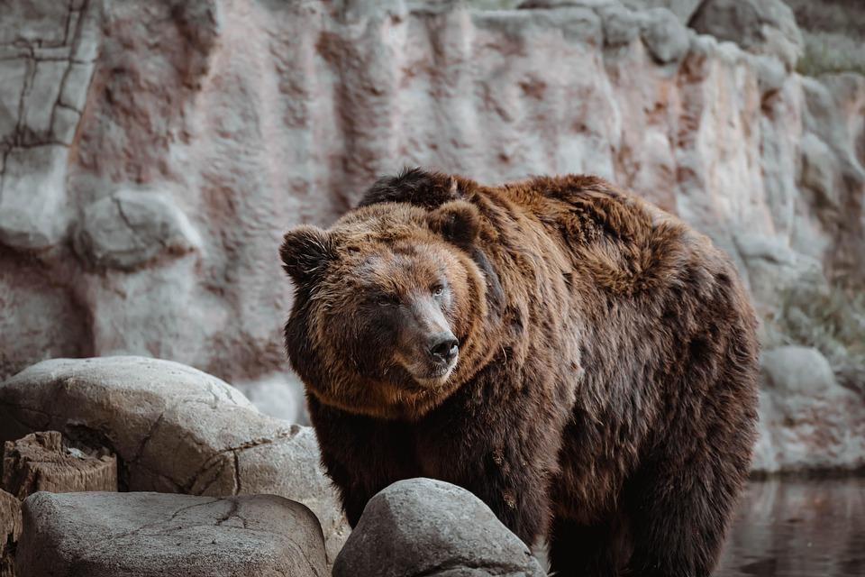 Bear, Animal, Zoo, Water, Nature, Risk, Dangerous