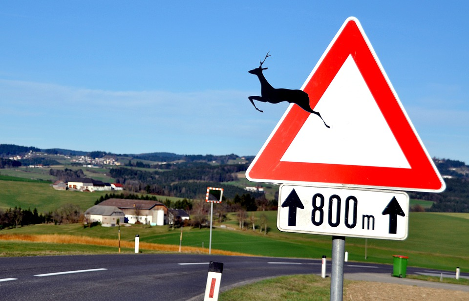 Wildwechsel, Risk, Road, Attention, Caution, Warning