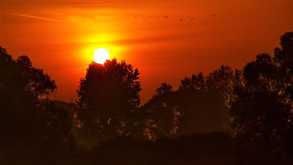 Drava, Sunset, River, Water, Birds