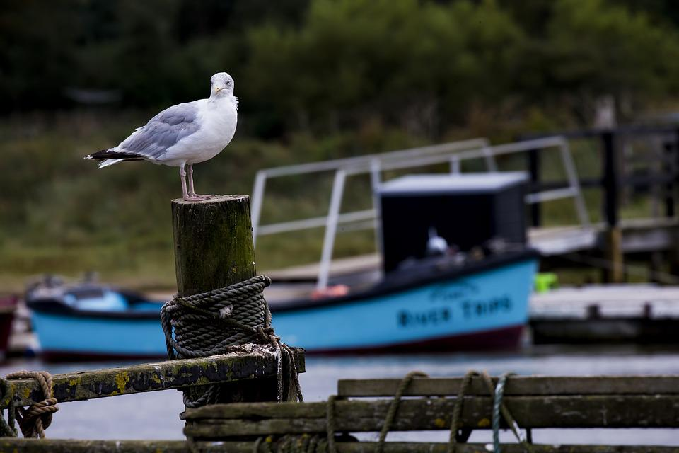 Seagull, Post And Rail, River Estuary, Moored Boat