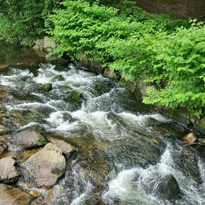 River, Fluent, Flow Water, Black Forest