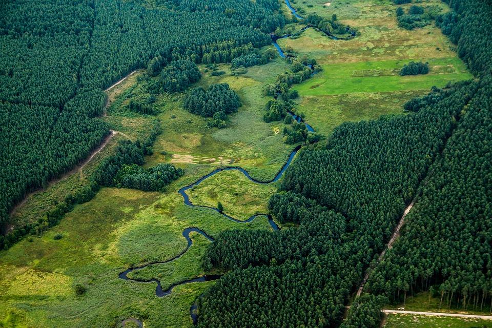 River, Landscape, Nature, Green, Poland, Band, Forest