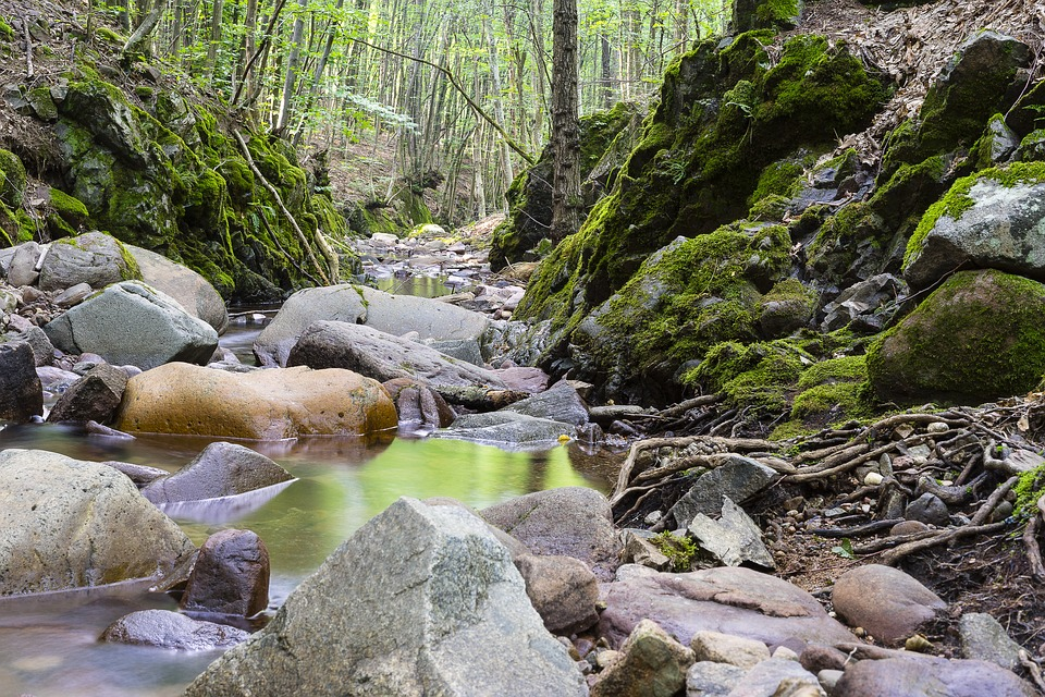 Landscape, Nature, Forest, River, Moss, Stones