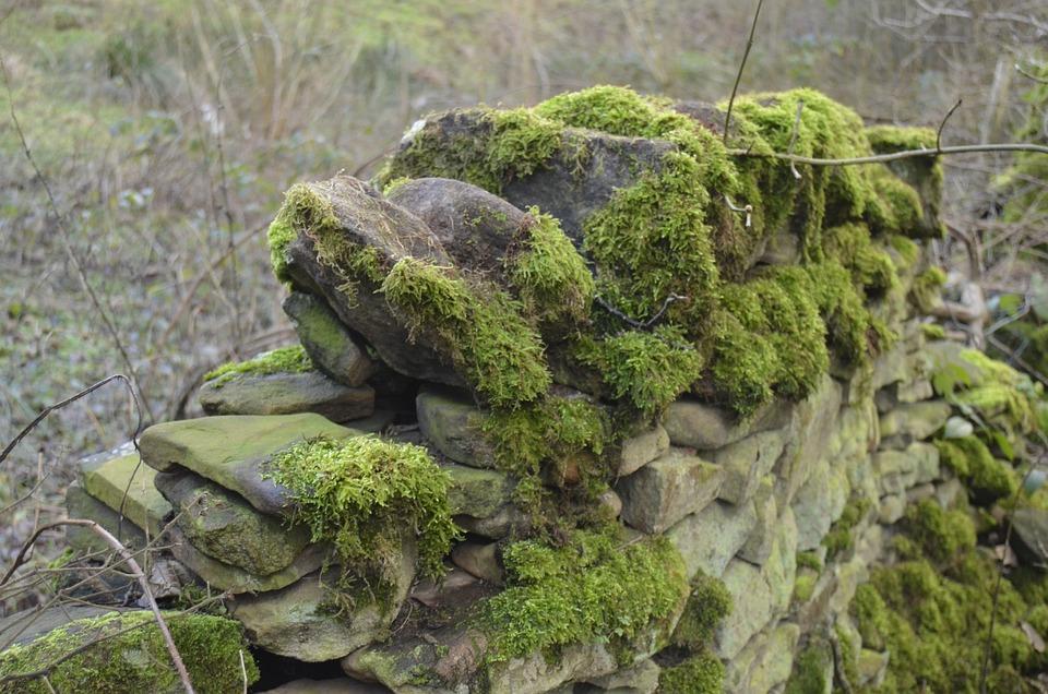 Moss, Stone, Wall, Waterfall, River, Landscape