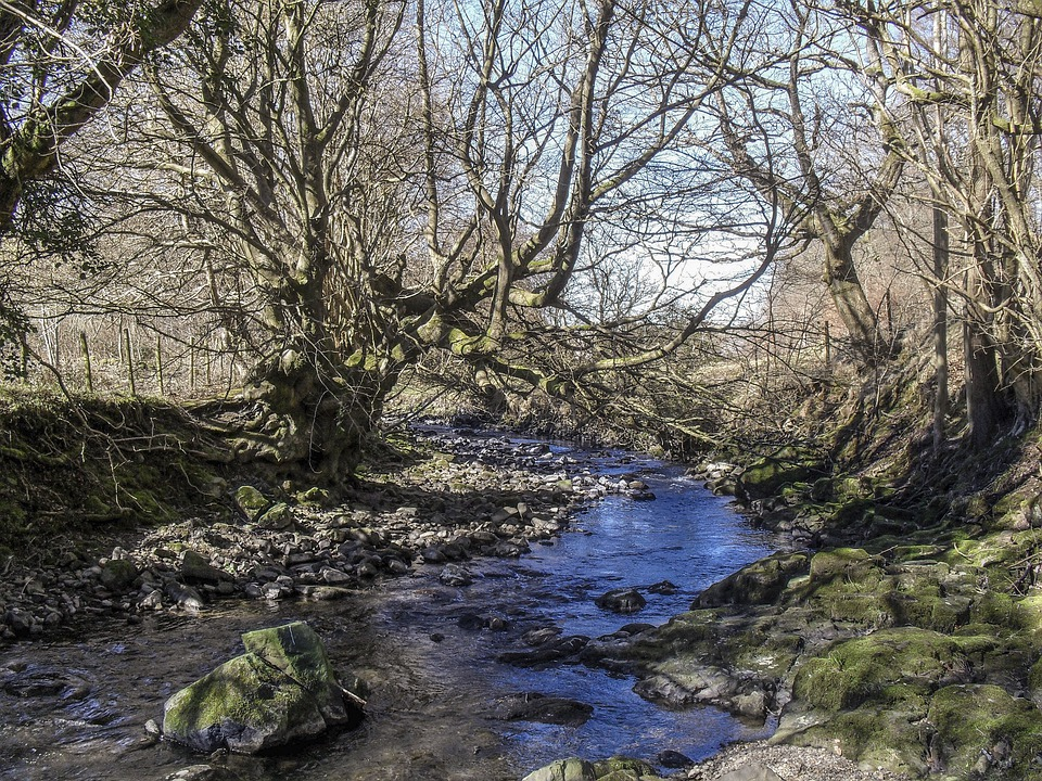 Woodland, River, Blaenavon, Landscape, Wilderness