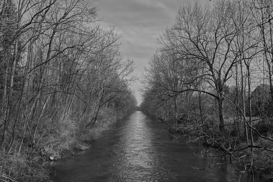 Forest, River, Water, Light, Shadow, Grey, Nature