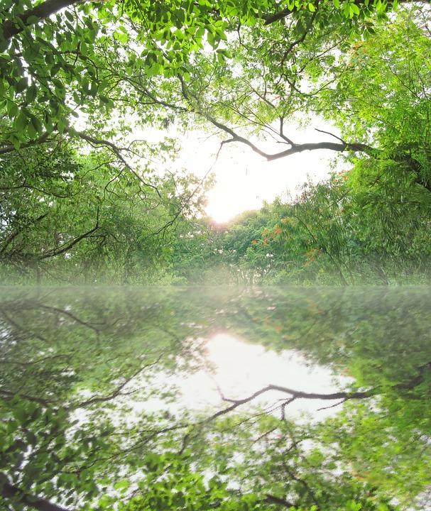 Landscape, Luxuriant, Fine Weather, River, Jungle