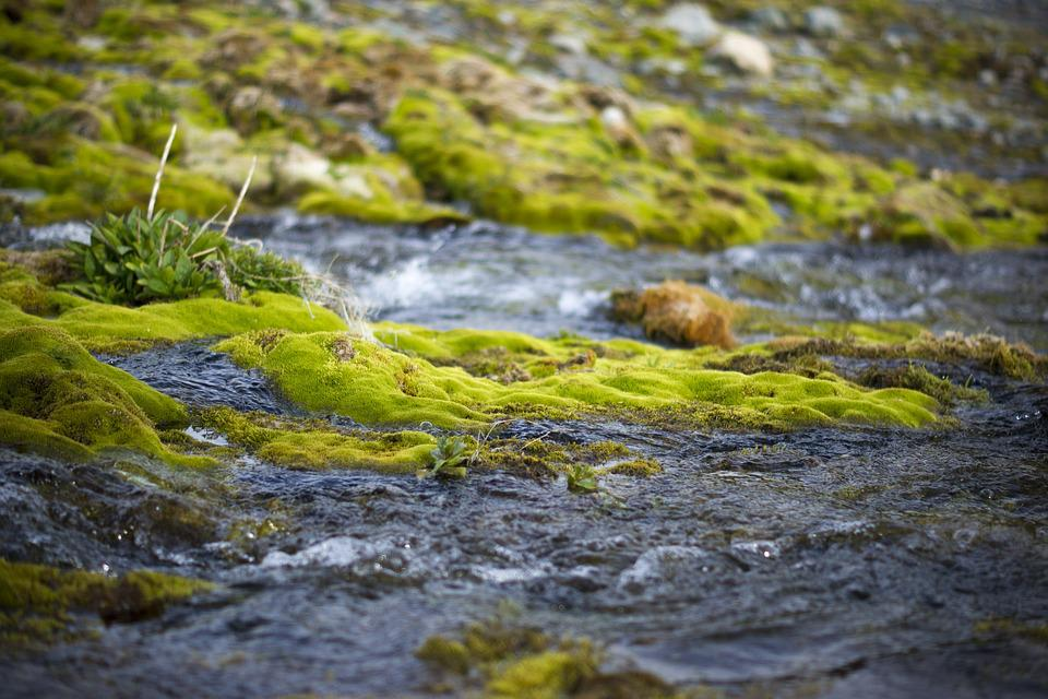 Creek, River, Nature, Moss, Stones, Mountain Altai