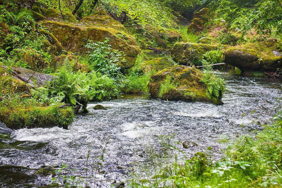 River, Stream, Water, Landscape, Nature, Forest, Scenic
