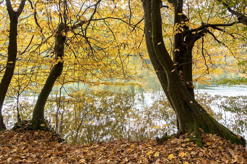 Autumn, On The River, River, Bank, River Reflection