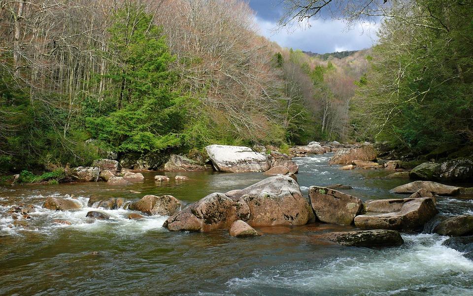 River, Rapids, Landscape, Edge, Rocks, Plants, Nature