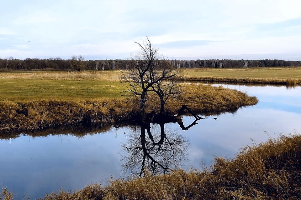 River, Tree, Mirroring, River Landscape