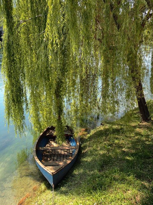 Boat, River, Adda, Shore, Water, Willow, Summer