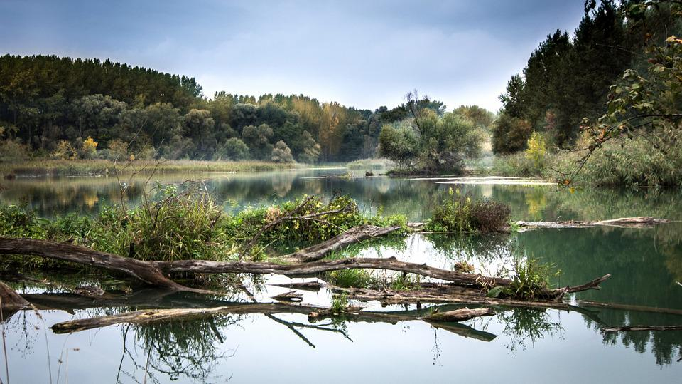River, Danube, Reflection, Slovakia, Trees, Water