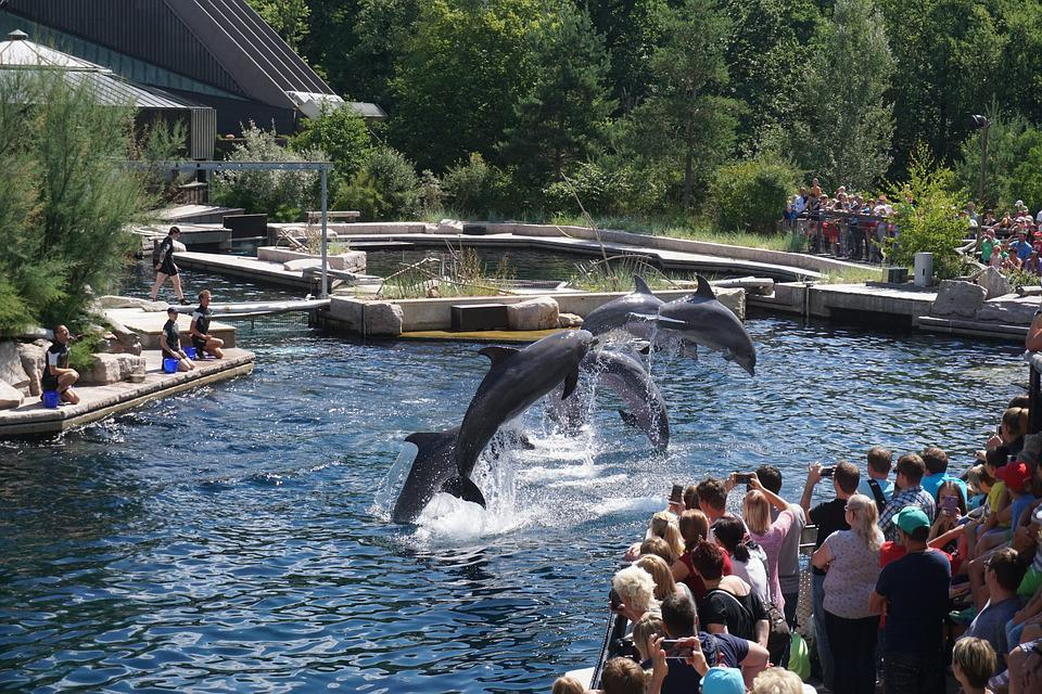 Waters, Travel, River, Tourism, Summer, Dolphins, Zoo