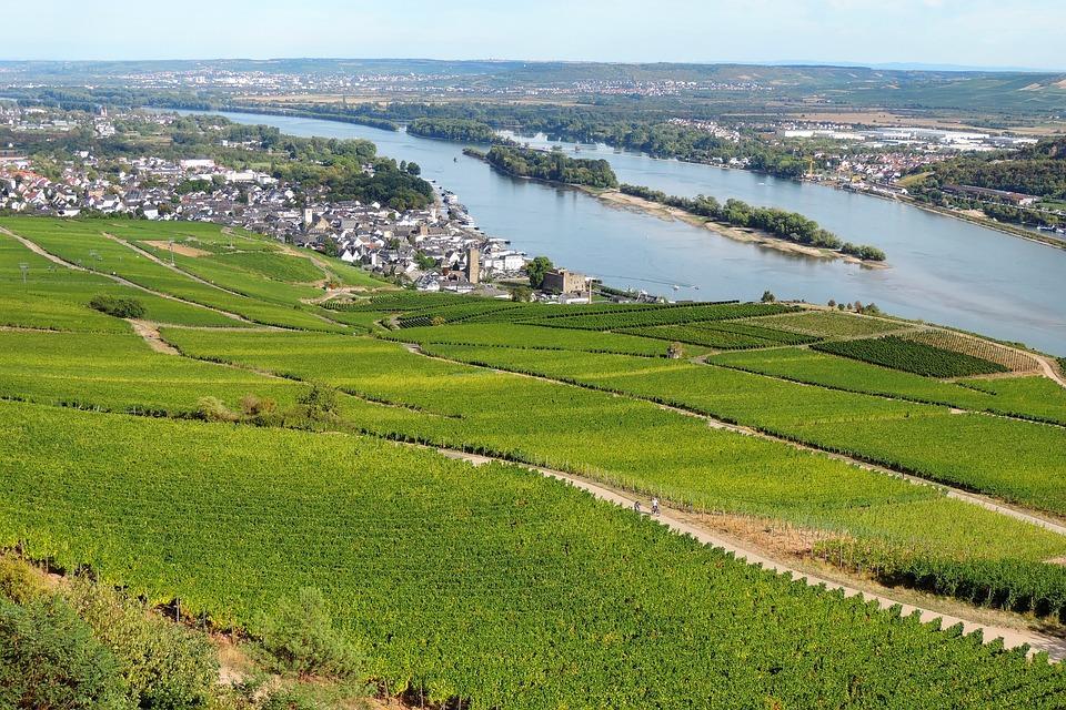 Rhine, Vineyard, River, Rhine Valley, Rüdesheim